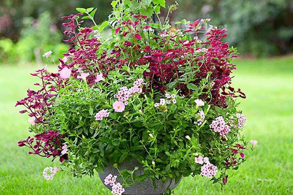 Plantas Perfectas Para Media Sombra