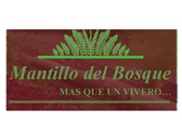 Mantillo Del Bosque